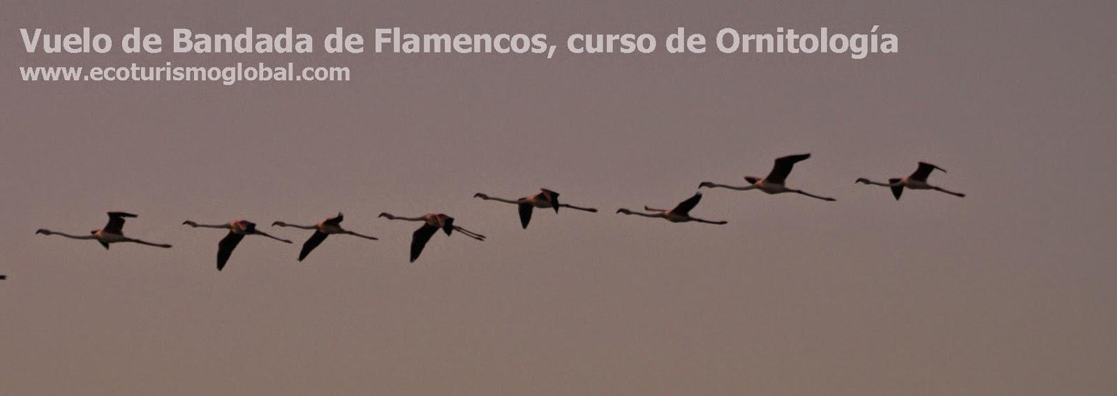 www.ecoturismoglobal.com