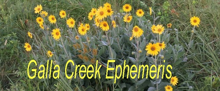 Galla Creek Ephemeris