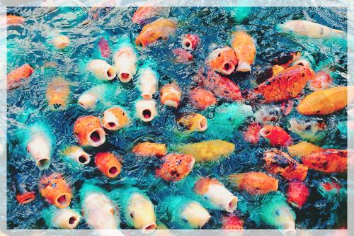 Teste de Personalidade Qual peixe você é?