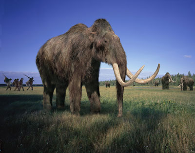 Woolly mammoths in certain