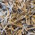Epson: Mythe van de papierloze samenleving ontkracht