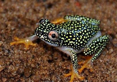 http://www.jadigitu.com/2012/12/katak-katak-cantik-yang-ternyata-beracun.html