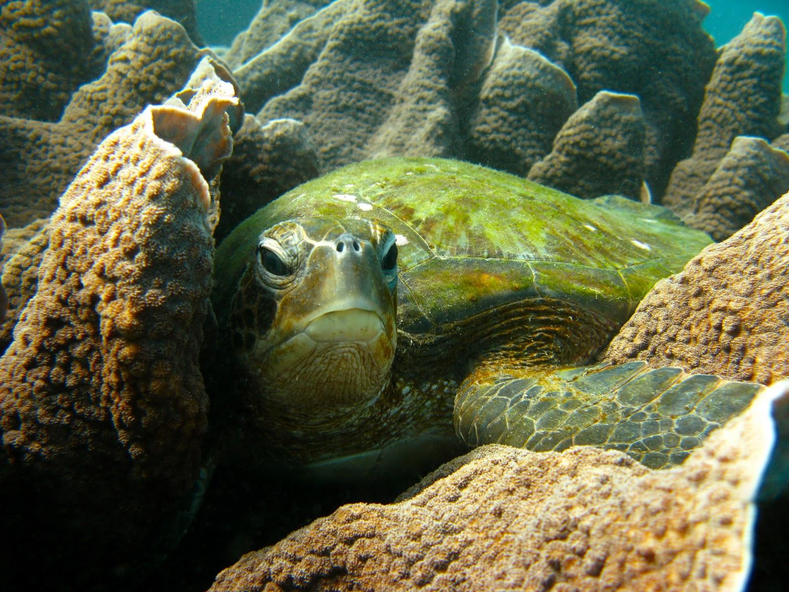 Una de cada seis especies de la película Nemo está en peligro de ...