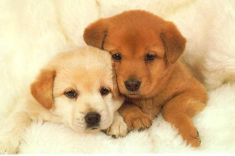cute puppies photos funny collection world