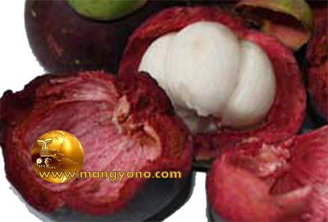 Seru juga buah manggis bisa dibuat jadi tebak-tebakan