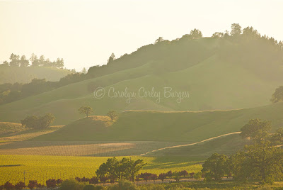 Beringer Knights Valley Vineyard