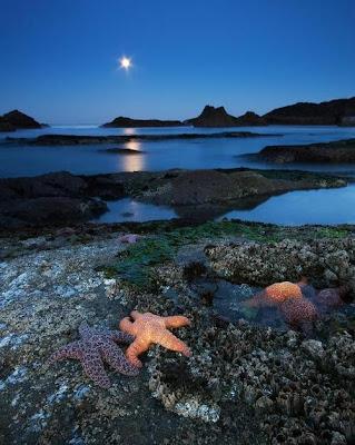 Moonlight Starfish, Seal Rock Beach, Oregon
