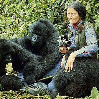 La cultiva dian fossey gorilas en la niebla for Gorilas en la niebla