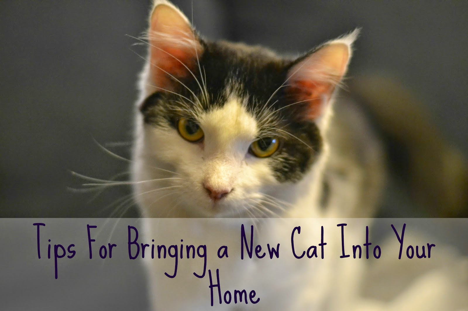 how to bring a cat into a new home