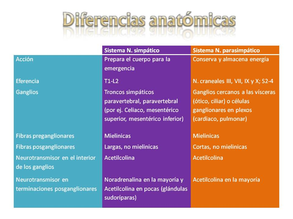 Fisiología - FACULTAD DE MEDICINA: Diferencias anatómicas del SNA ...