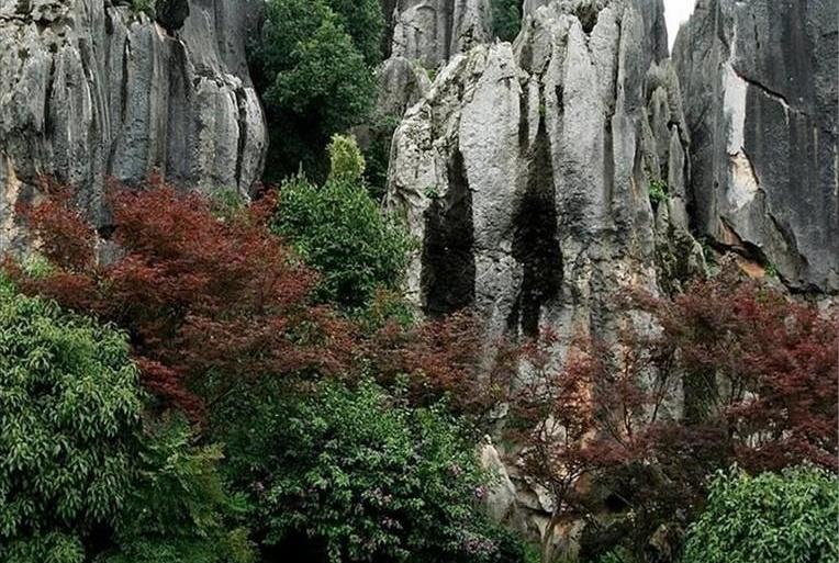 http://4.bp.blogspot.com/-lrdOuYGpNds/Tey7dK7mupI/AAAAAAABKfA/vtdhz9TR95U/s1600/Stone_Forest_Nature_Photography_9.jpg