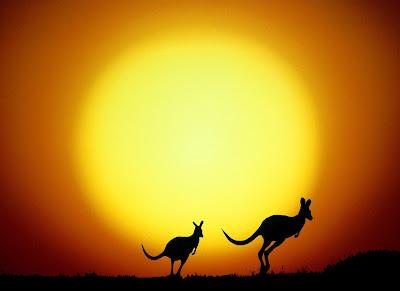 Sombras de canguros saltando en el amanecer