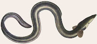 http://sciencythoughts.blogspot.co.uk/2013/05/the-effect-of-parasitic-nematodes-on.html