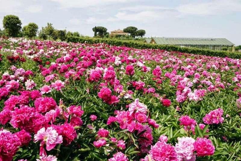 100 jardines para la expo milano 2015 - Rose coltivazione in giardino ...