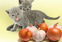 makanan yang berbahaya bagi kucing