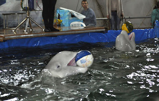 дельфинарий в Кирове
