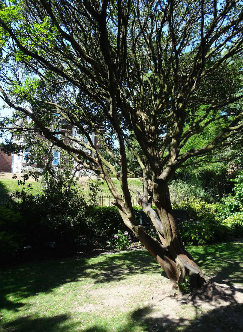 Bournemouth_The_Gardens