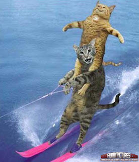 funny cat in water skiing