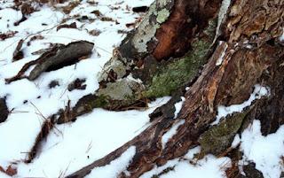 Найближчої доби погоду в Україні визначатиме холодна арктична повітряна маса