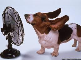 About Dogs In Heat