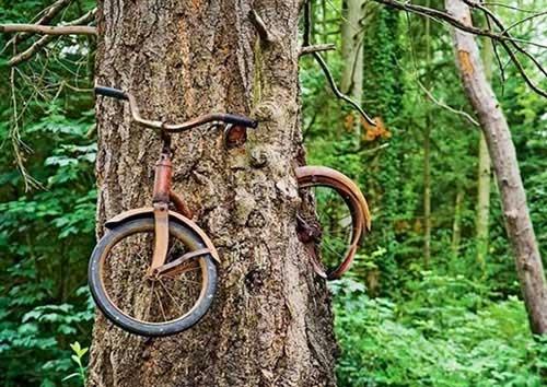 Xem những cây mọc ký quặc nhất thế giới