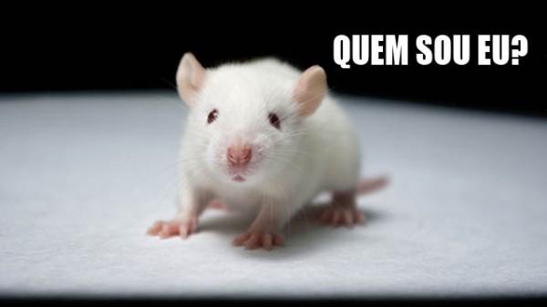 Cientistas criam ratos mais inteligentes utilizando neurônios humanos