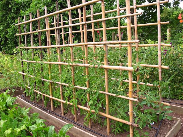 En el jardin la huerta en noviembre for Tutores para plantas