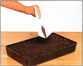 Осторожно распределите семена по поверхности как можно более равномерно