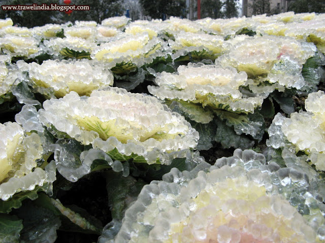 After ice rain in South China