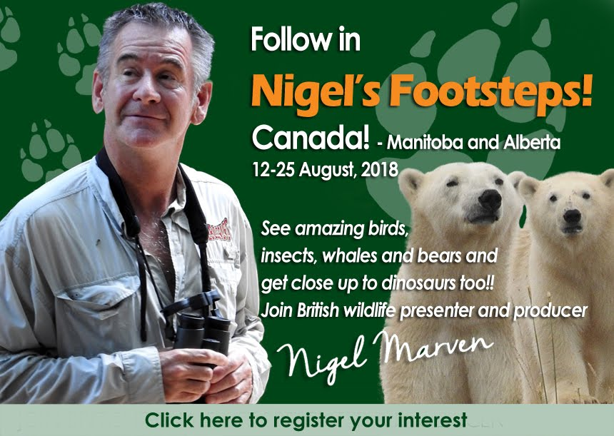 Follow in Nigel's Footsteps