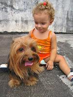 Adestramento de cães - Yorkshire