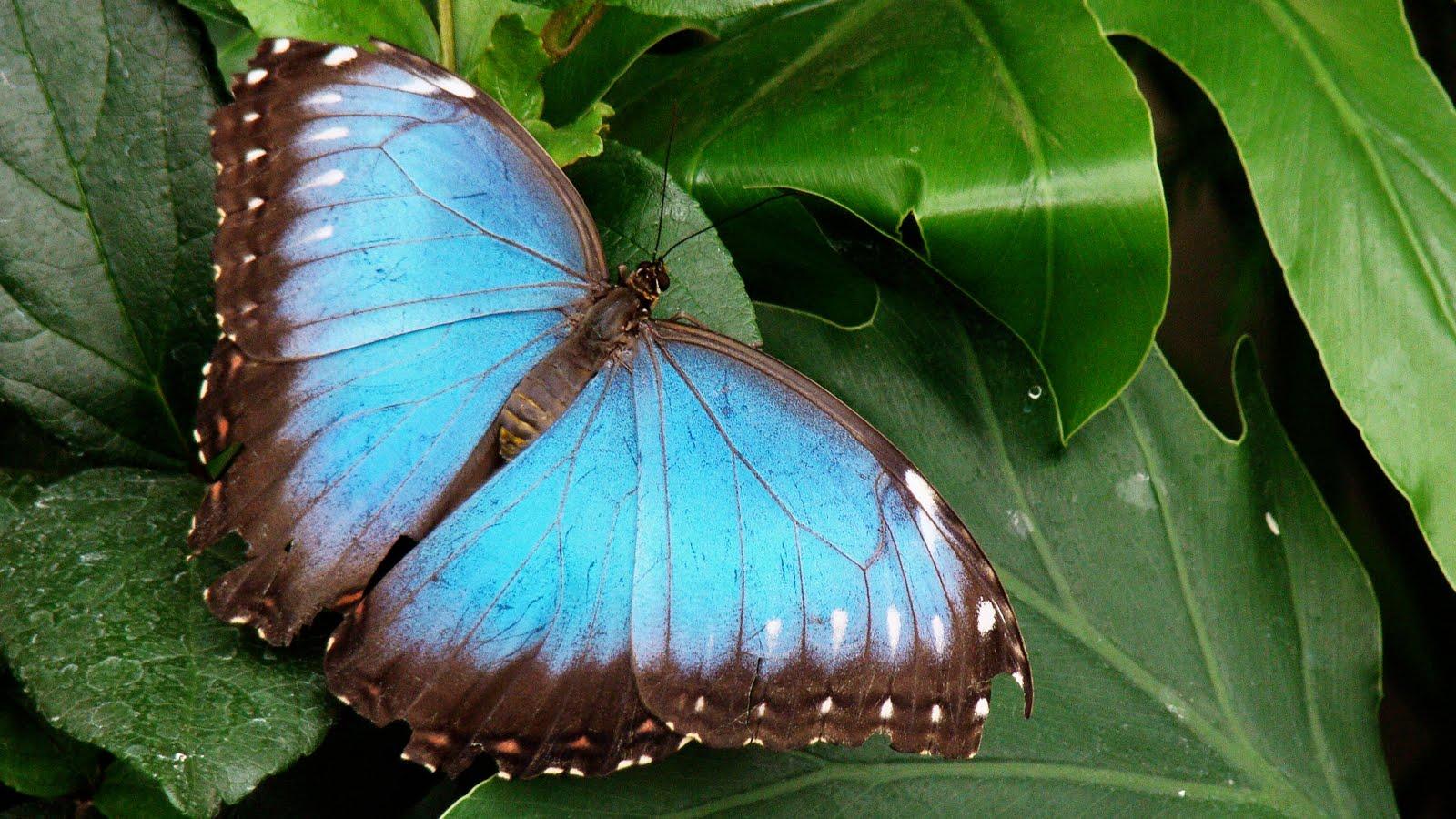 Mon r el montr al papillons en libert au jardin botanique for Papillon jardin botanique 2015