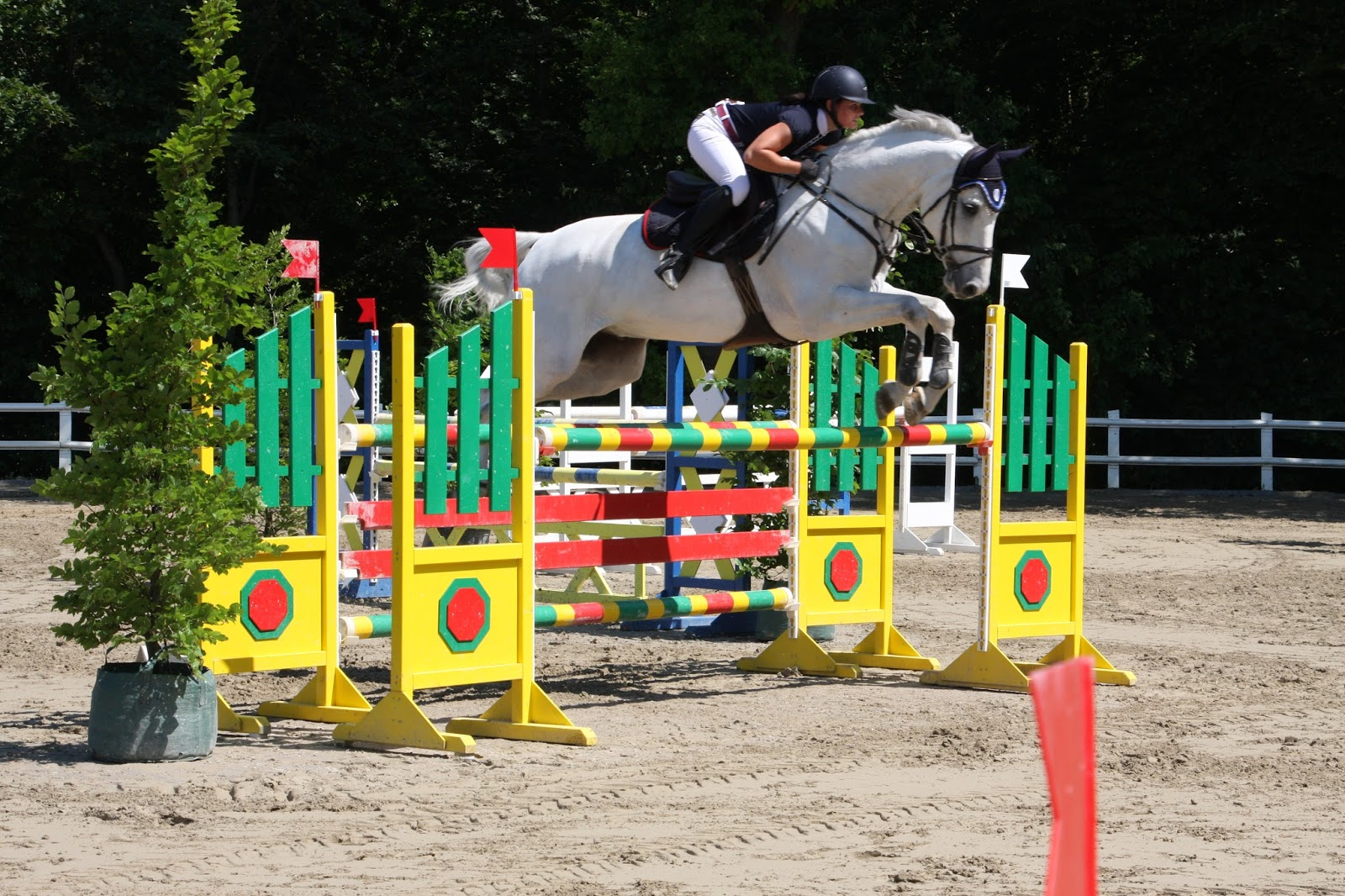 Ami im schwabenland geeking out at a horse show but this is what i do at horse shows take pictures and i could do it all damn day i am out of publicscrutiny Gallery