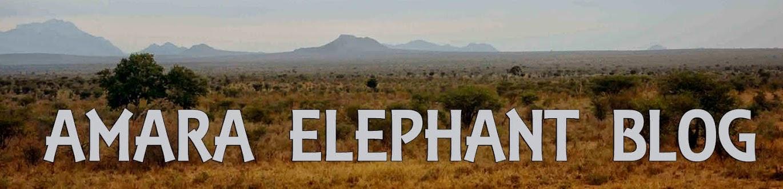 AMARA ELEPHANT BLOG!