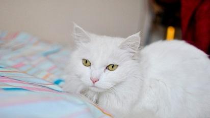 Nama Kucing Betina Yang Unik Lucu Dan Menggemaskan