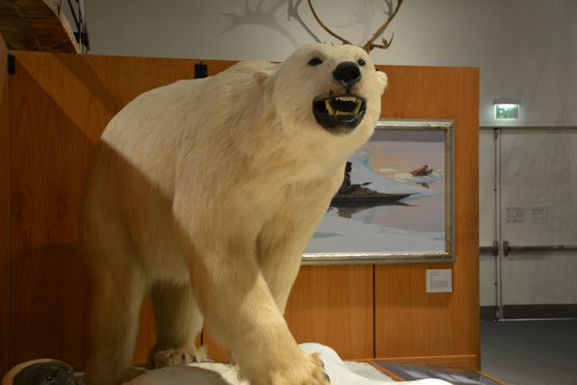 Museum of the North Fairbanks polar bear
