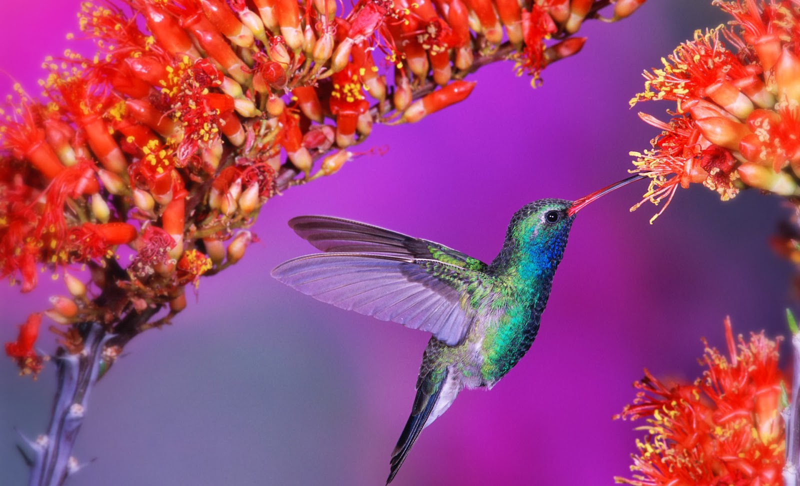 Beautiful Birds Wallpapers Hd Beautiful Desktop
