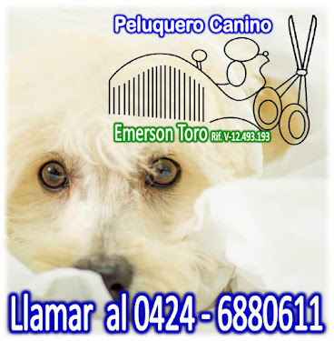 Peluquería Canina Raza Pequeña y Mediana