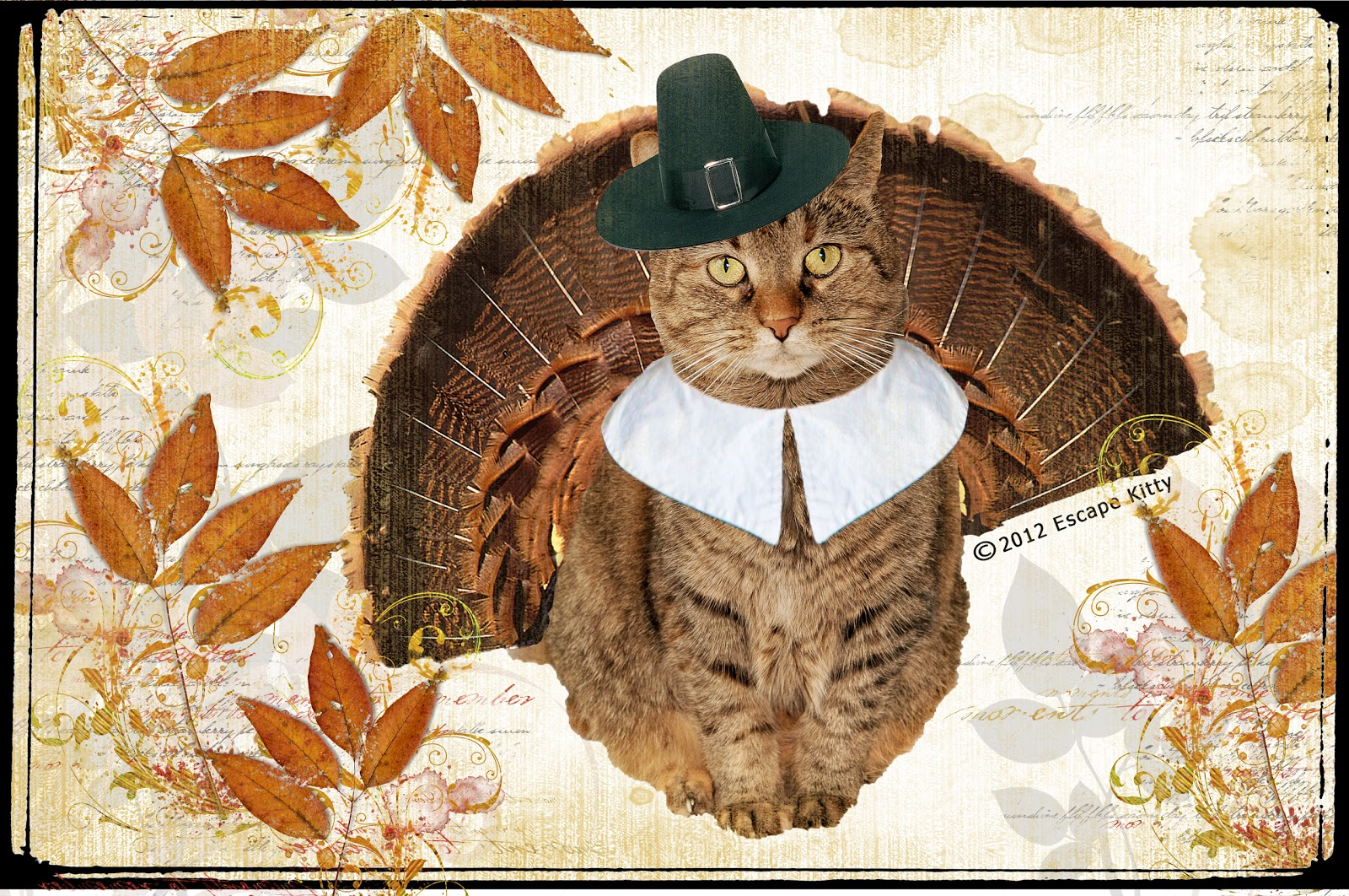 http://4.bp.blogspot.com/-lw1btGv4hhA/UKwyhF5I2jI/AAAAAAAAFcs/DQlfagfe3TQ/s1600/Thanksgiving+Kitty+in+photo.jpg