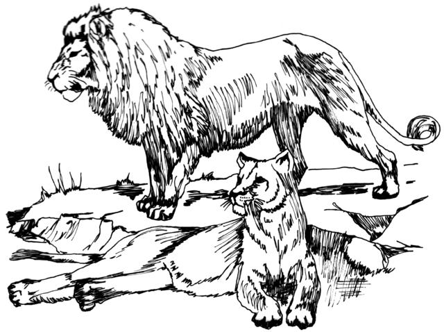 leones para imprimir