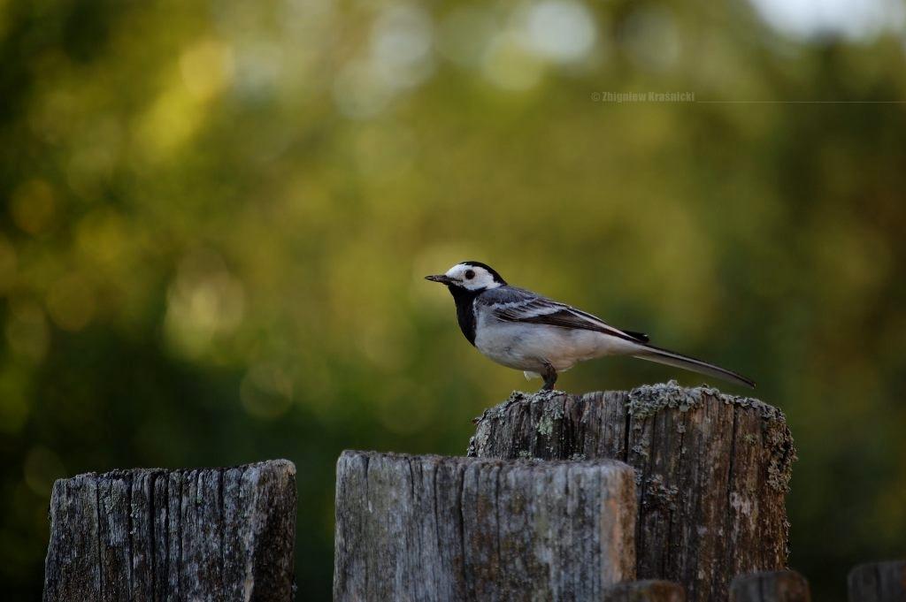 Z kamerą wśród ptaków