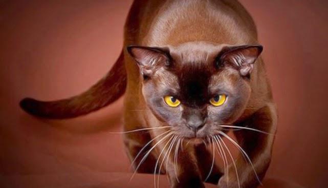 Если в доме кошка или не дай Бог кот