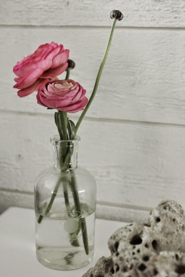 ranunkler, rosa blommor, snittväxter, snittblomma, rosa, blomma, laboratorieglas, lab glas, flaska, vas,