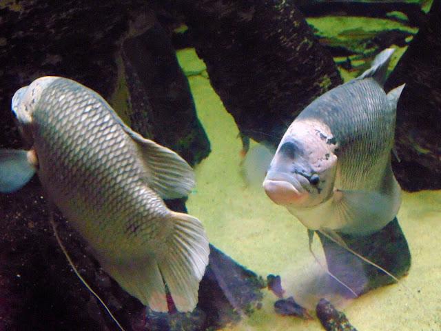 Japanese Fish