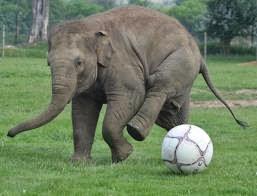 http://www.activiscope.com/flash_new.php?activity=elephant&id=20084