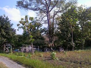 Warga Desa Ngrejeng Gelar Tradisi Haul Massal di Maqom Ploso Agung