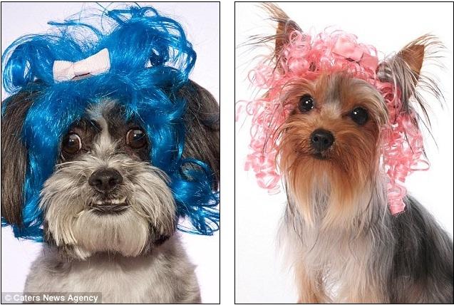 Wiggles Pet Wigs 109