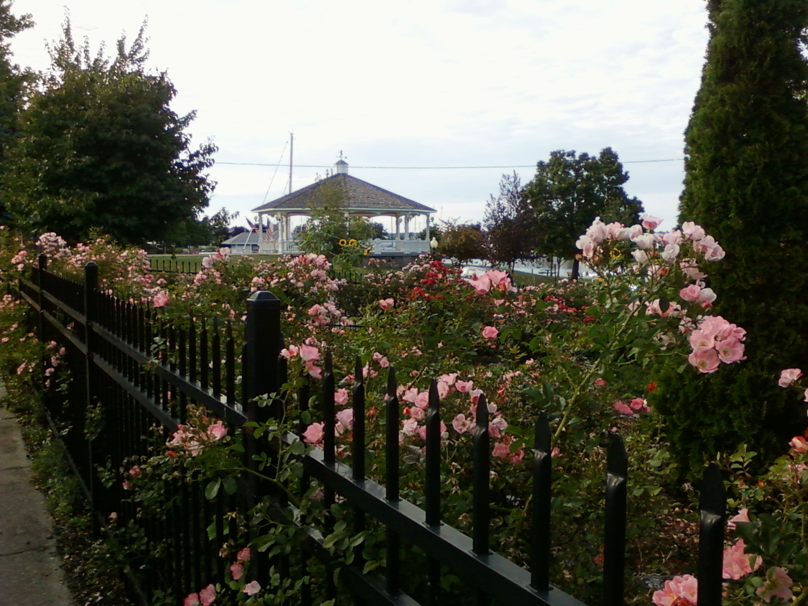 The Northern New York Gardener: Flowers & Gardens of Sackets Harbor ...
