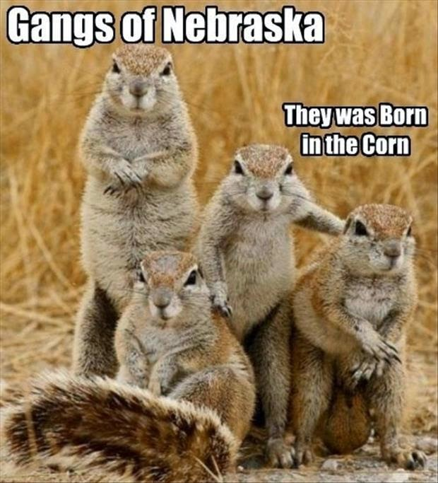 30 Funny animal captions - part 21 (30 pics), captioned animal pictures, gangs of nebraska