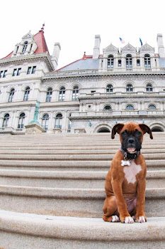 Dog Days in Albany.....That's Grace on Capitol Steps